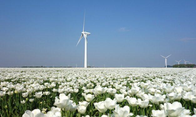 Sådan får du strøm fra danske vindmøller